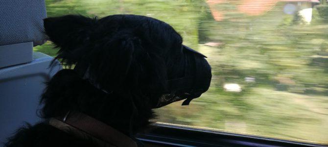 Kutyával vonatoztunk a Balaton körül